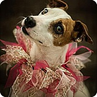 Adopt A Pet :: Calamity Jane - Oklahoma City, OK