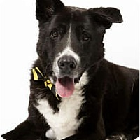 Adopt A Pet :: Flops - New York, NY
