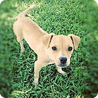 Adopt A Pet :: Peaches - Katy, TX
