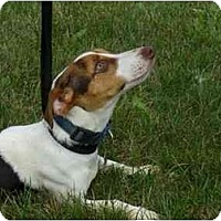 Adopt A Pet :: Stella - Marysville, OH