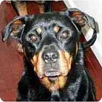 Adopt A Pet :: Maddie & Zeke - Belleville, MI
