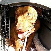Adopt A Pet :: Mira - Calgary, AB