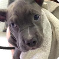 Adopt A Pet :: Lucy1 - Rockaway, NJ