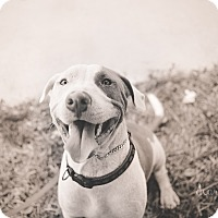 Adopt A Pet :: Beaux - San Antonio, TX