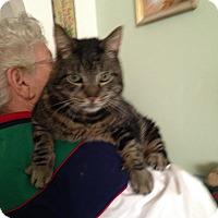 Adopt A Pet :: Tycho - Kelso/Longview, WA