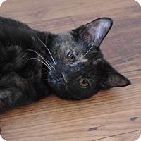 Adopt A Pet :: Sweet Pea - Brockton, MA