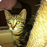 Adopt A Pet :: Betty - Toronto, ON