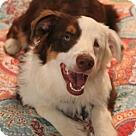 Adopt A Pet :: Finnegan