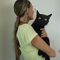 Adopt A Pet :: ALL BLACK CATS - Makawao, HI