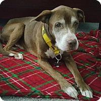 Adopt A Pet :: Taz - Southampton, PA