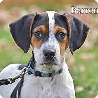 Adopt A Pet :: Barren - Pleasant Plain, OH