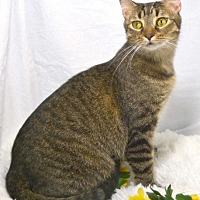 Adopt A Pet :: Lila - St. Cloud, FL
