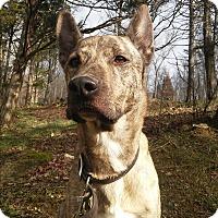 Adopt A Pet :: Becker - Louisville, KY