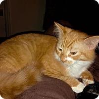 Adopt A Pet :: Butterscotch - Harrisburg, NC