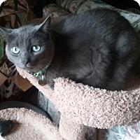 Adopt A Pet :: Bixby - Livonia, MI
