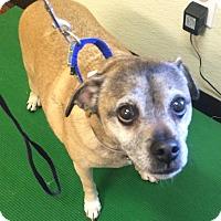Adopt A Pet :: Bruno - Oak Ridge, NJ