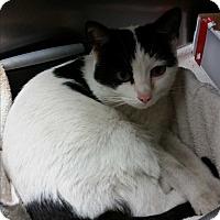 Adopt A Pet :: Hollyhock - Chippewa Falls, WI