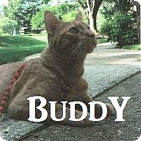 Adopt A Pet :: Buddy - Merrifield, VA