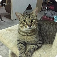 Adopt A Pet :: Zeus - St. James City, FL