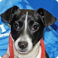Adopt A Pet :: Sarah - Spokane, WA