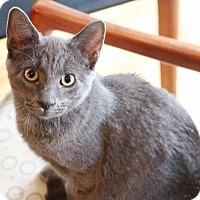 Adopt A Pet :: Biggie - Brooklyn, NY