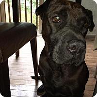 Adopt A Pet :: Margo - Gilbertsville, PA