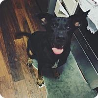 Adopt A Pet :: Princess - Jacksonville, NC