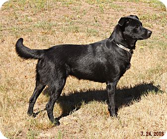 Labrador Retriever Mix Dog for adoption in Braintree, Massachusetts - Drina