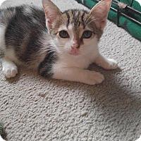 Adopt A Pet :: EVE - Golsboro, NC