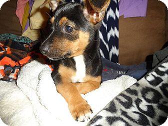 Terrier (Unknown Type, Medium) Puppy for adoption in Tomah, Wisconsin - Wanda