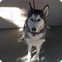 Adopt A Pet :: I1265663 - Pomona, CA