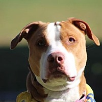 Adopt A Pet :: Lola - Va Beach, VA