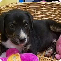 Adopt A Pet :: Max - Decatur, AL