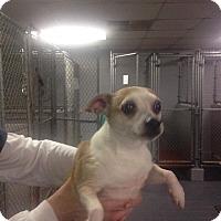Adopt A Pet :: Carter - Newport, KY