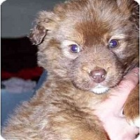 Adopt A Pet :: Coco - Honaker, VA