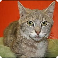 Adopt A Pet :: CINDY - SILVER SPRING, MD