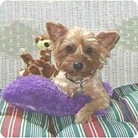 Adopt A Pet :: Rachel - Mooy, AL