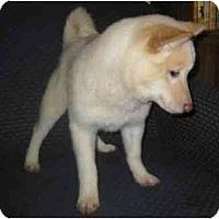 Adopt A Pet :: Nikki - Antioch, IL