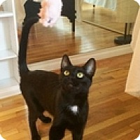 Adopt A Pet :: Corey - Vancouver, BC