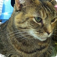 Adopt A Pet :: Dutchess - Bensalem, PA