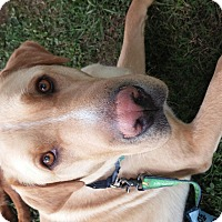 Adopt A Pet :: Taylor - Marietta, GA