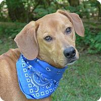 Adopt A Pet :: Gabby - Mocksville, NC