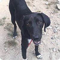 Adopt A Pet :: Norton - Cashiers, NC