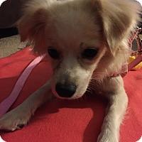 Adopt A Pet :: Bonnie - Santa Ana, CA