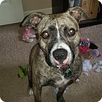 Adopt A Pet :: Jasmine - Colorado Springs, CO
