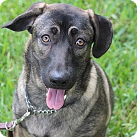 Adopt A Pet :: Honey - Ft. Myers, FL
