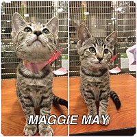 Adopt A Pet :: Maggie May - Orlando, FL