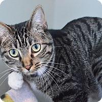 Adopt A Pet :: Ariel - Lincoln, NE