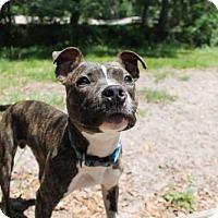 Adopt A Pet :: Kylo - Gainesville, FL