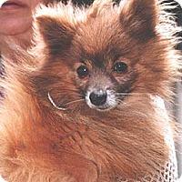 Adopt A Pet :: Marvey/Marvin D548 - Fremont, CA